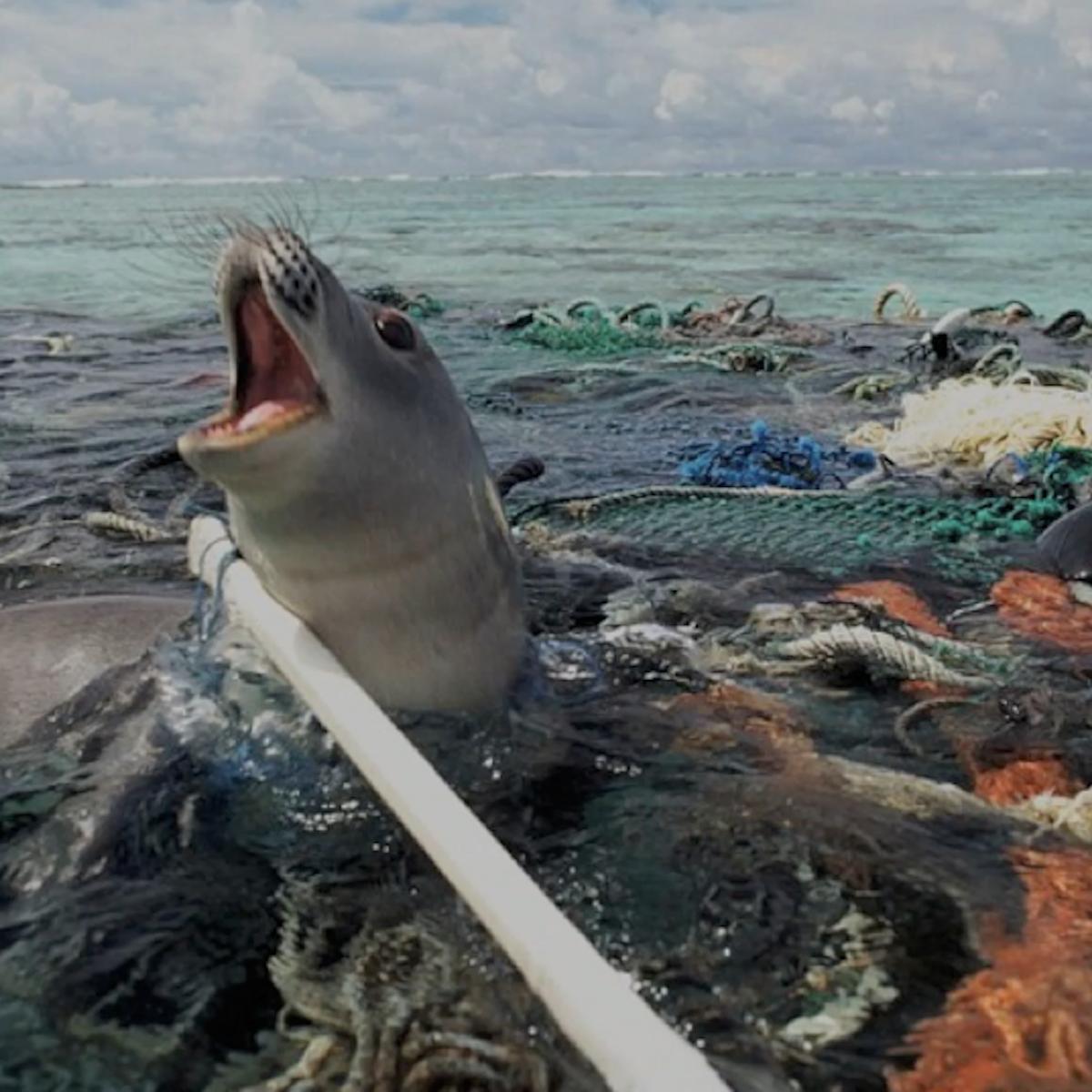 An International Plastics Treaty Could Avert A Silent Spring For Our Seas Diy plastic animal planters | ehow. an international plastics treaty could