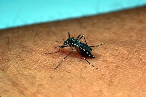 How we pinned down what attracts mosquitos that carry dengue fever