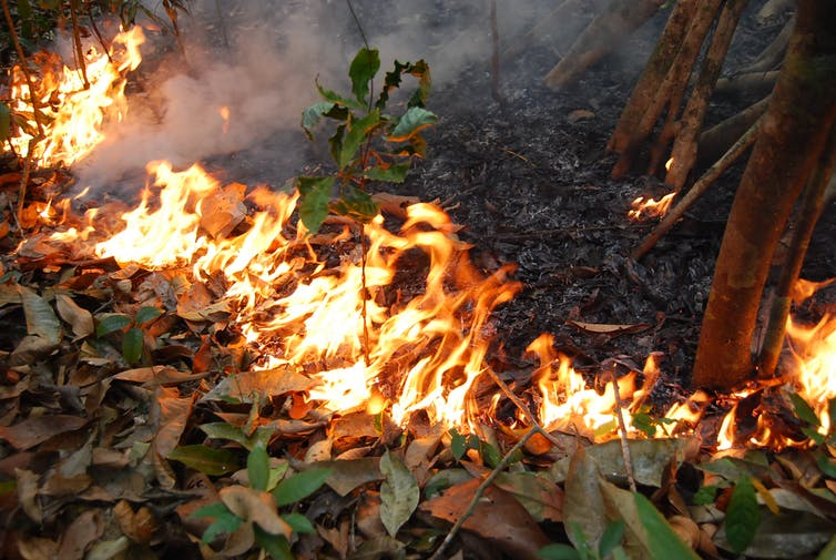 Amazon Rainforests That Were Once Fire Proof Have Become Flammable