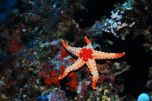Starfish Can See In The Dark Among Other Amazing Abilities