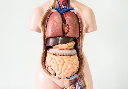 Sept Organes Dont Nous Pourrions Nous Passer