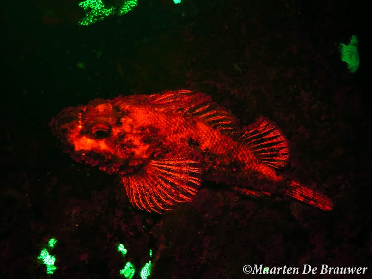 Now you see us: how casting an eerie glow on fish can help count and conserve them