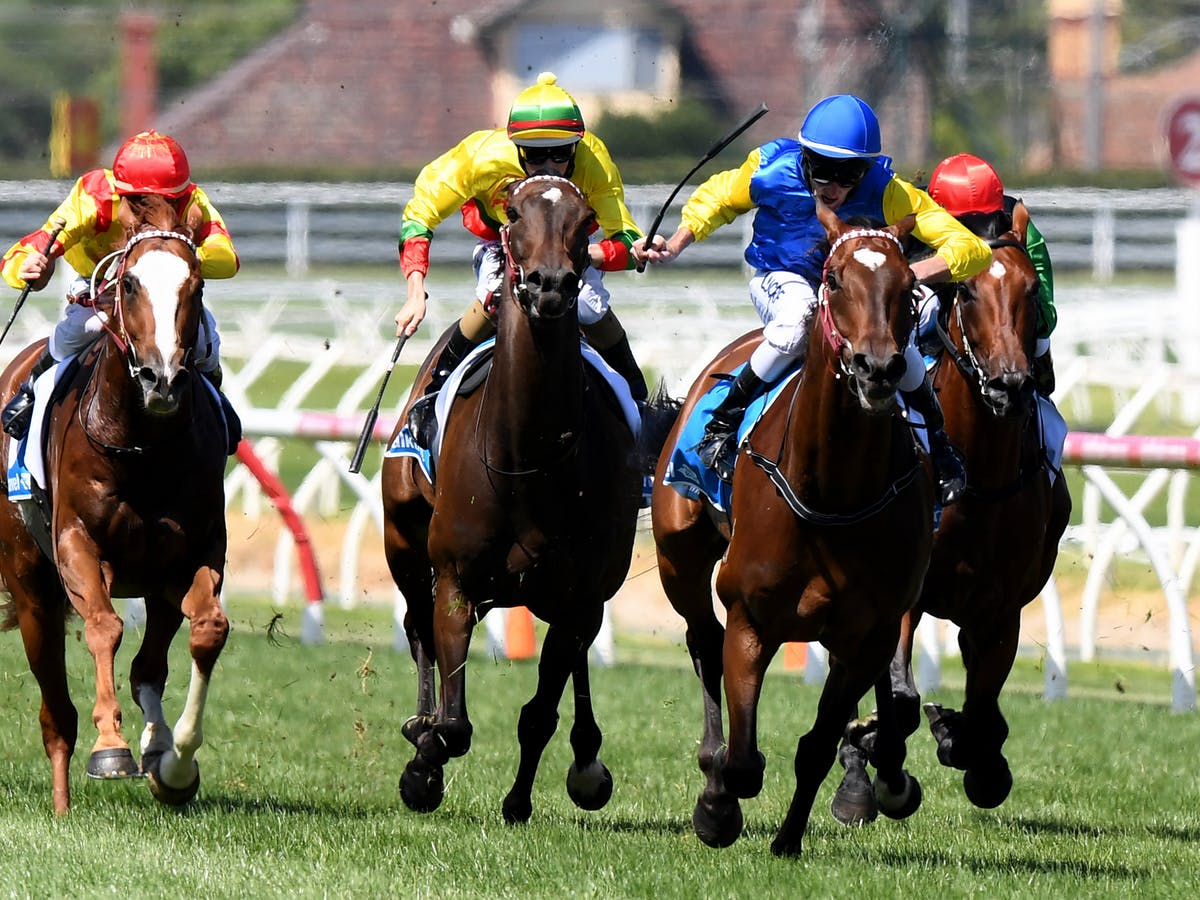 Oz horse racing australia betting sports betting system excel