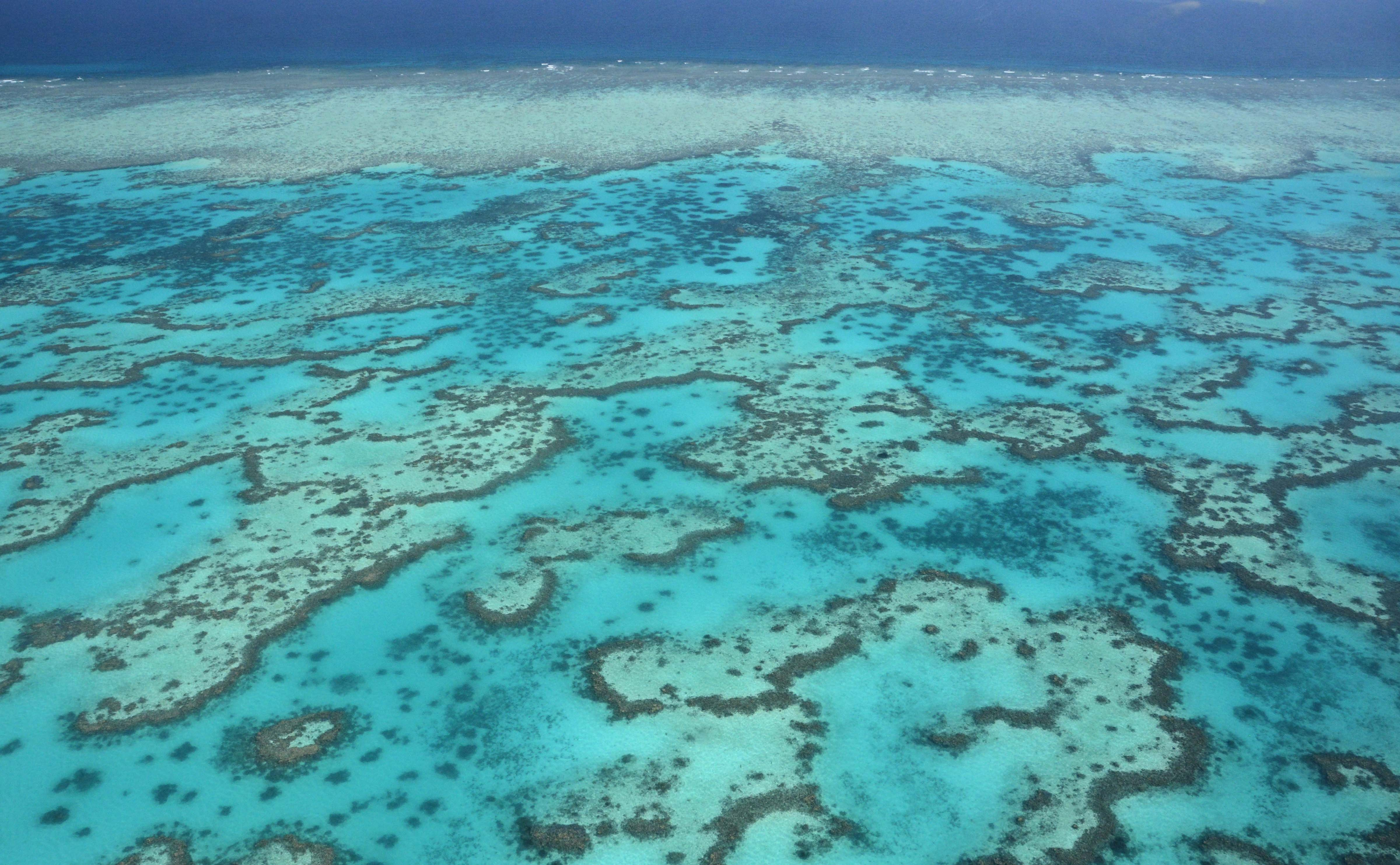 Our acid oceans will dissolve coral reef sands within decades