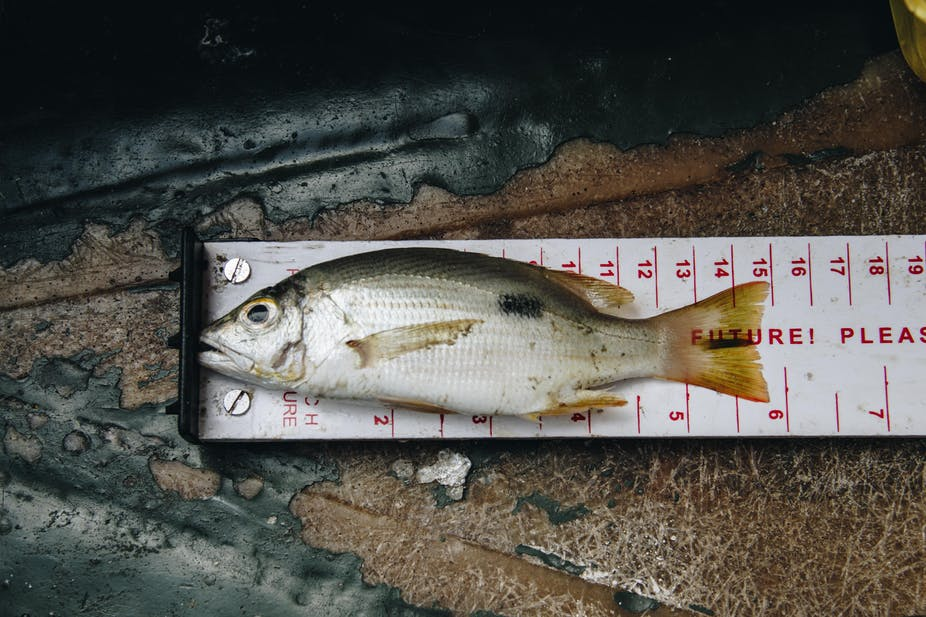 Small-scale fisheries are throwing away fish that could feed