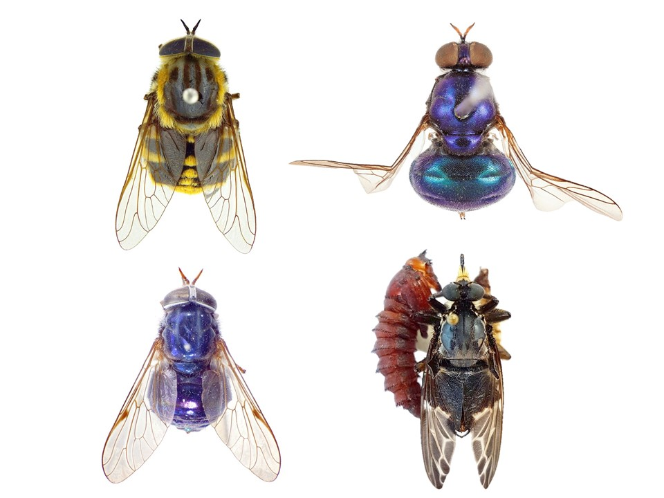 do insects sleep