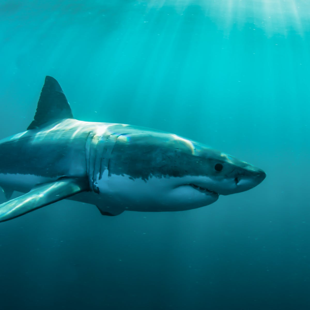 FactFile: the facts on shark bites and shark numbers