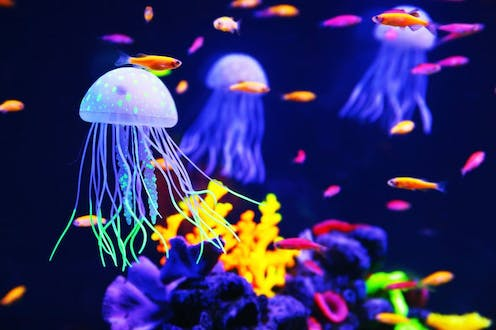 jellyfish have superpowers and other reasons they don t deserve
