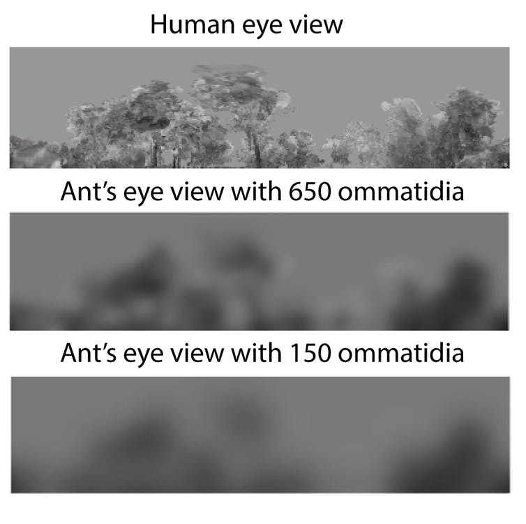 In an ant's world, the smaller you are the harder it is to see obstacles