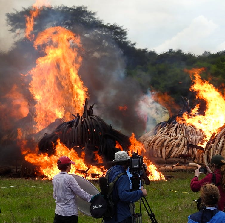 Ivory up in flames, but who really noticed? How messages on elephant poaching might be missed