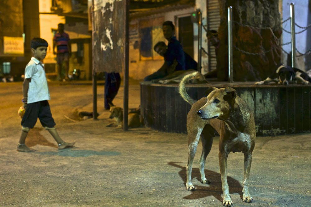 The dogs bite people and can carry the deadly rabies virus. Photo credit: Steve Winter/National Geographic, Author provided