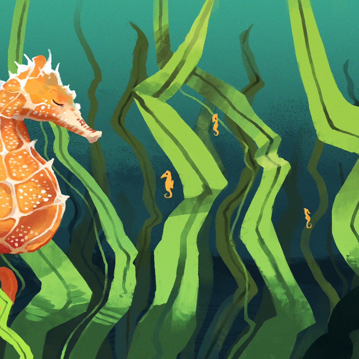 Curious Kids: Is it true that male seahorses give birth?