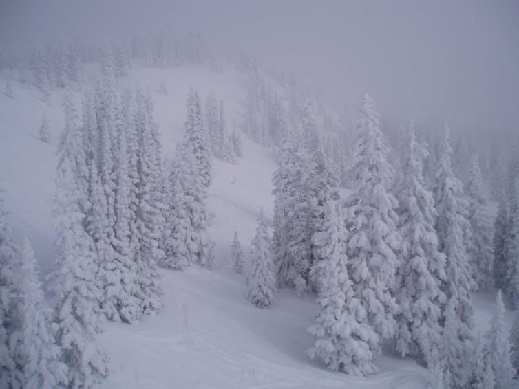 Cloud seeding blizzard photo