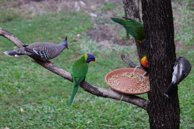 Yes it's okay to feed wild birds in your garden, as long as it's the right food