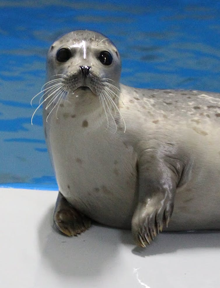 Sharp claws helped ancient seals conquer the oceans