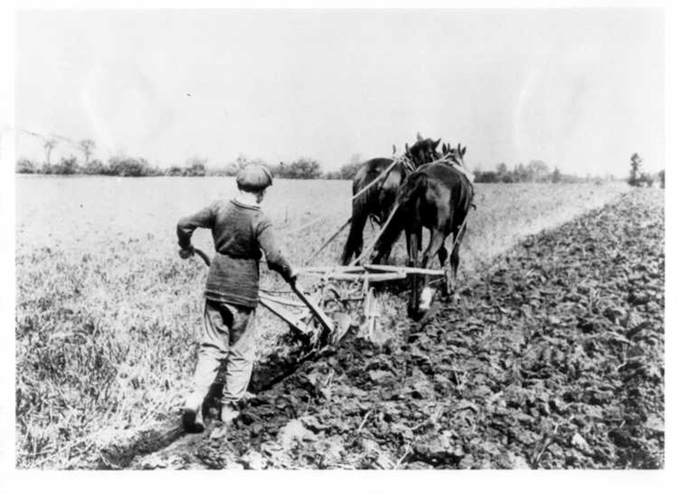 Мальчик, пашущий на ферме доктора Барнардо в Манитобе. Канада, 1900 год