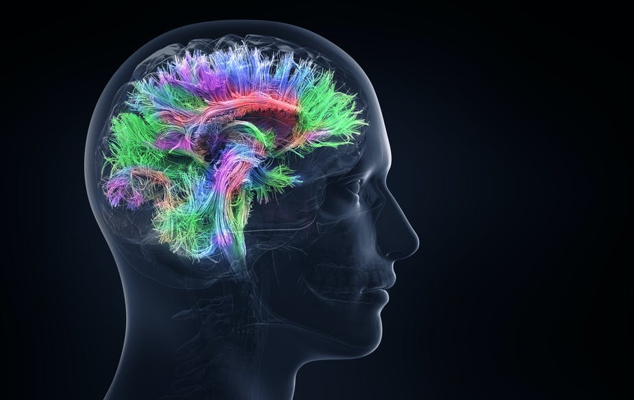 Weve Located The Part Of The Brain Which Understands Social