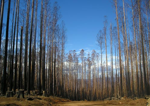 Native forest protections are deeply flawed, yet may be in place for another 20 years