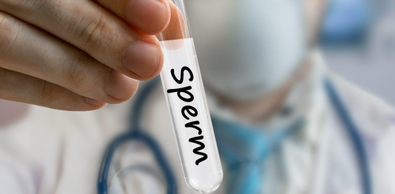 Australian sperm donor register translation fifi fume