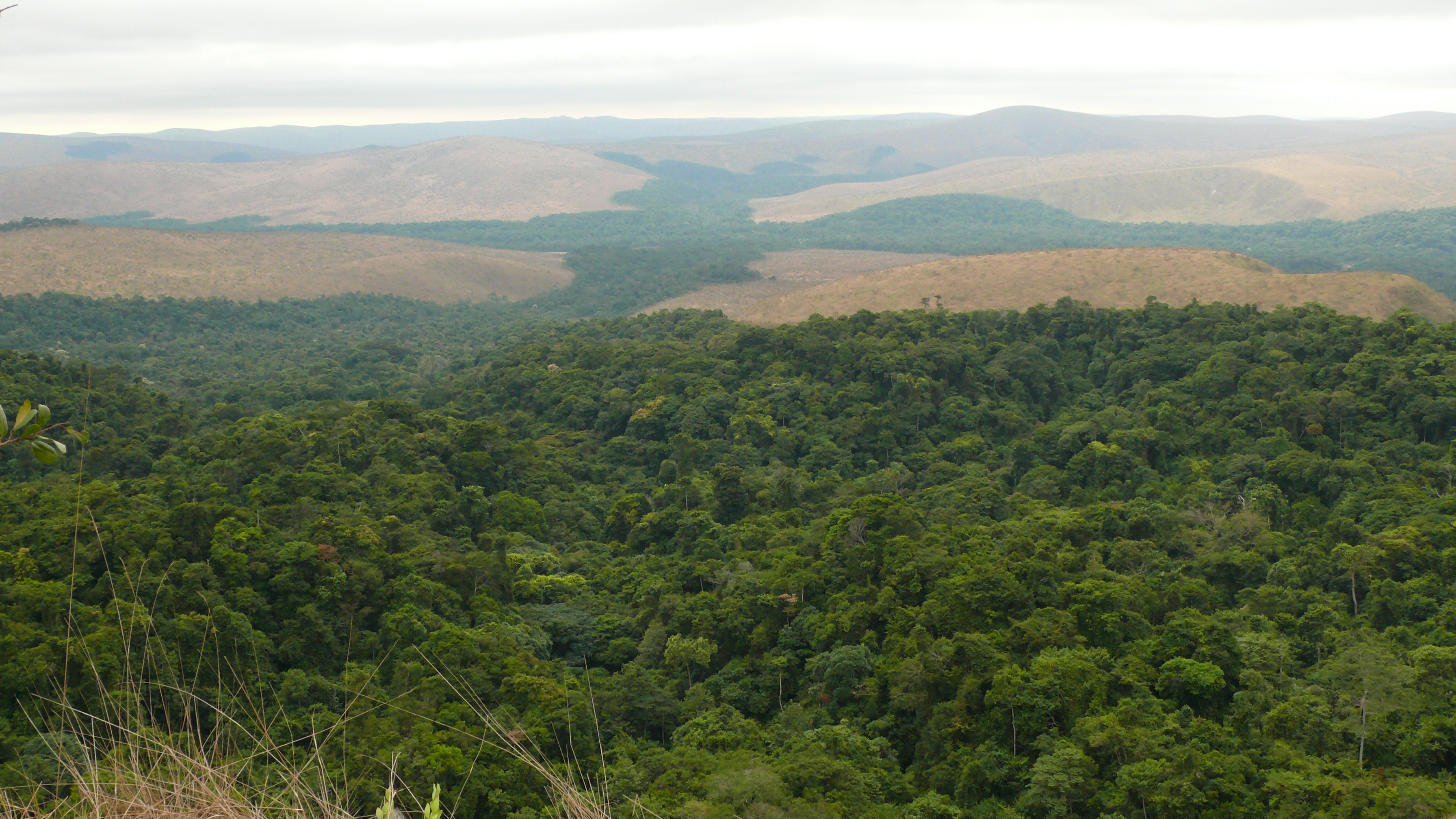 Bateke Plateau National Park is situated at the transition between forest and savannah habitats