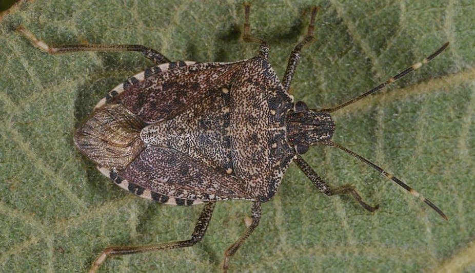 the city loving devil bug lands in paris and continues its march