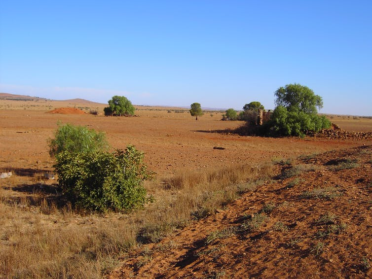 Recent Australian droughts may be the worst in 800 years