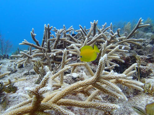 coral reefs are in crisis but scientists are finding effective