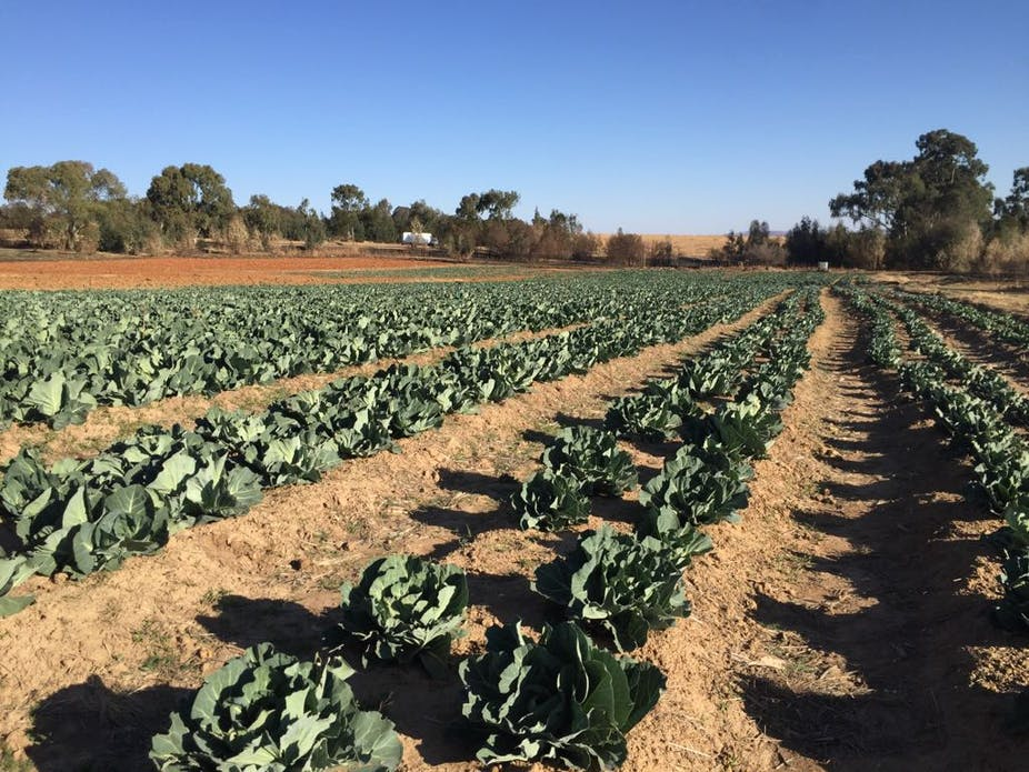 Obstacles Facing A Young Black Farmer In South Africa A
