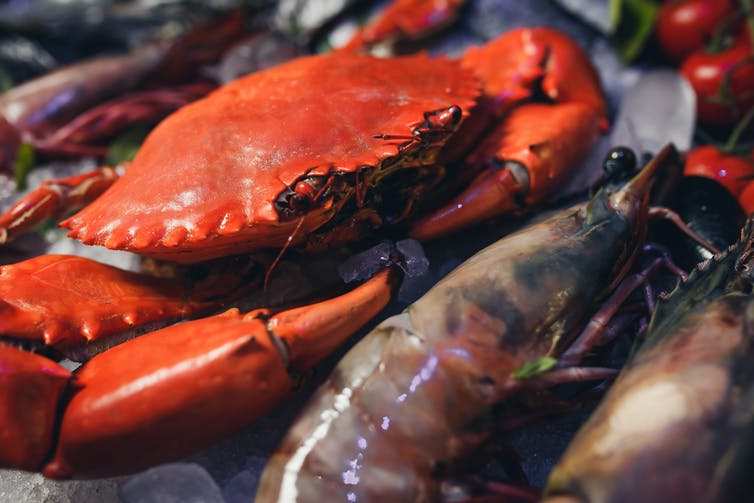 Why do crab and prawn shells go red after they have been cooked?