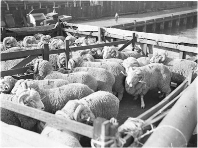 Australia's history of live exports is more than two centuries old