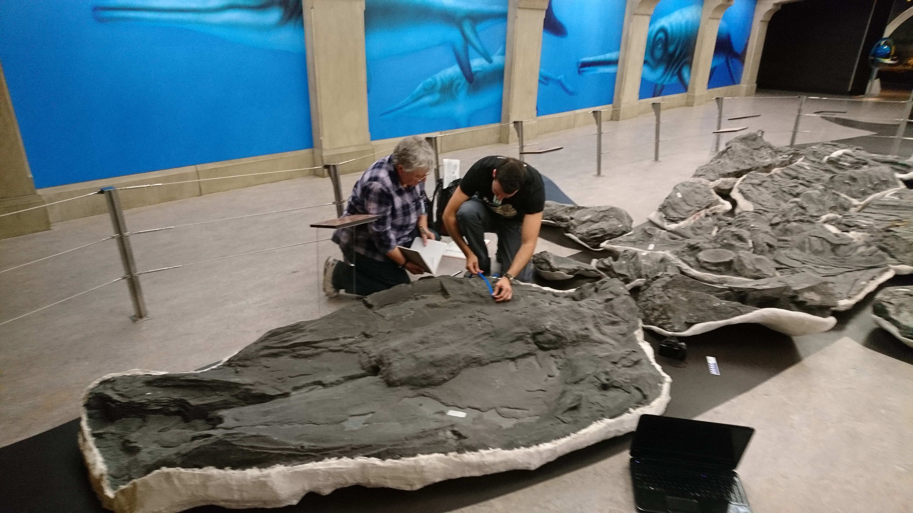 how we found a giant ichthyosaur almost as big as a blue whale