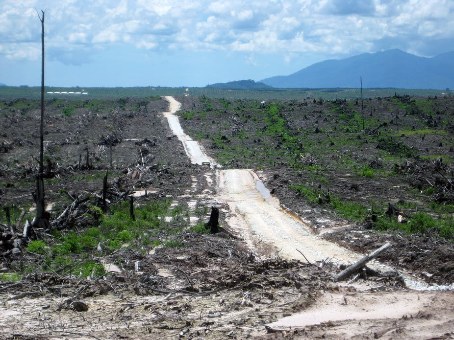 Technologys impact on the rain forest