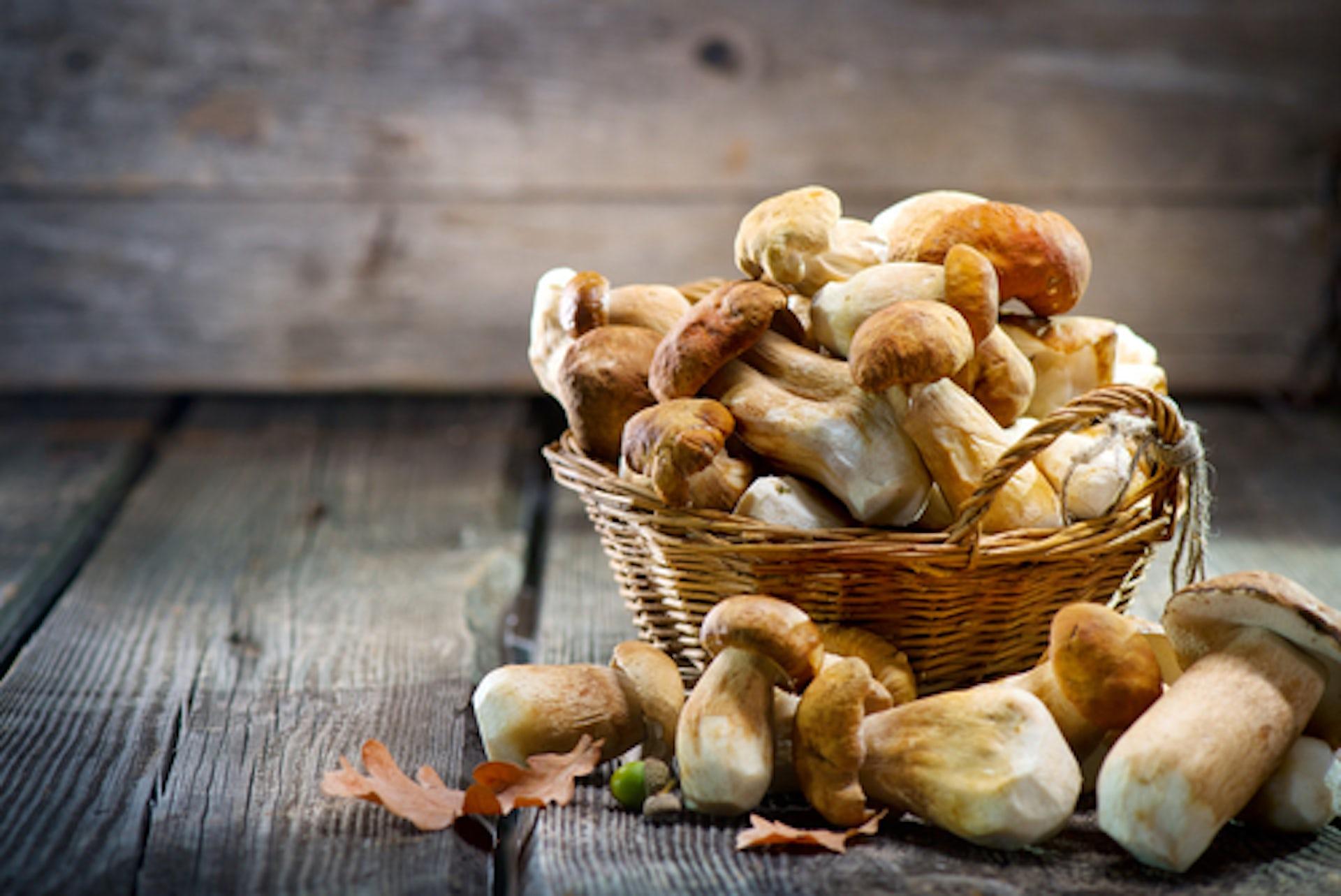 Canadian researchers use mushroom building blocks 94