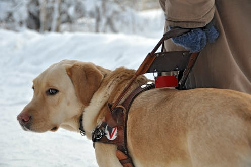 How fake assistance animals and their users are gaming the system and increasing prejudices