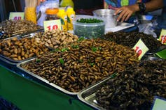 Edible bugs, worms and larvae are on display at a Thai market.