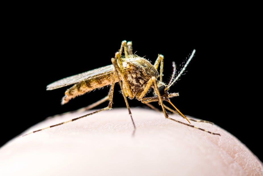 Scientists Design A Novel Formula That Repels And Kills Mosquitoes