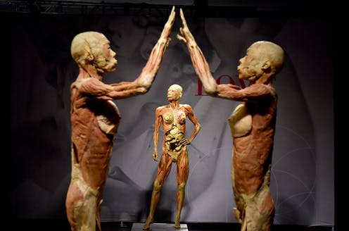 Real Bodies Controversy How Australian Museums Regulate