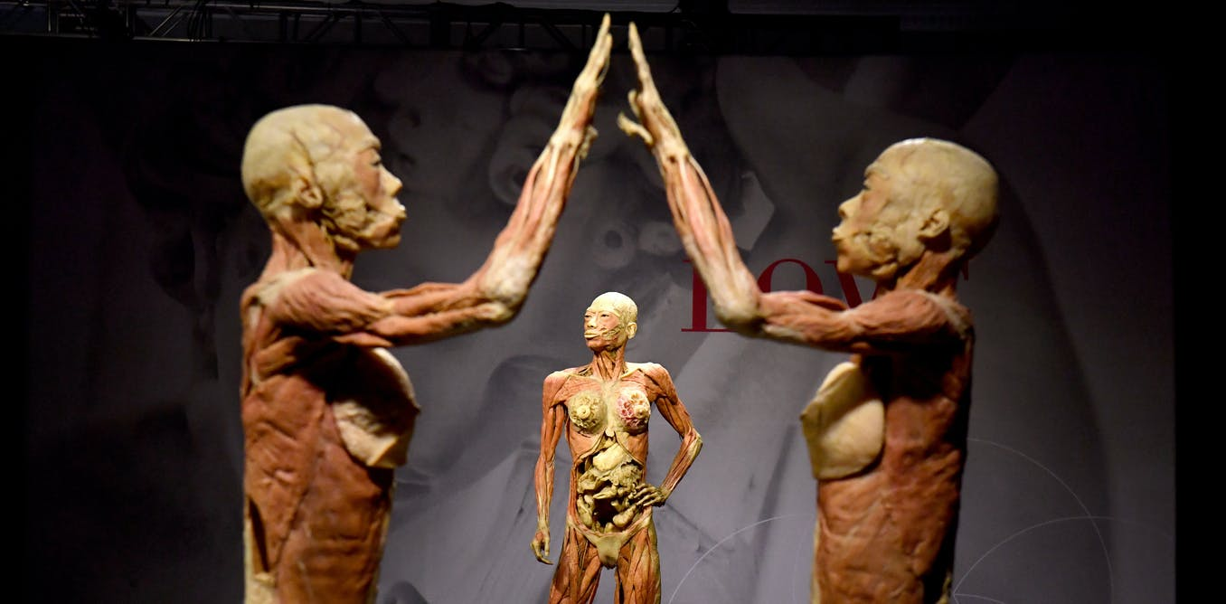 Real Bodies Controversy How Australian Museums Regulate The Display