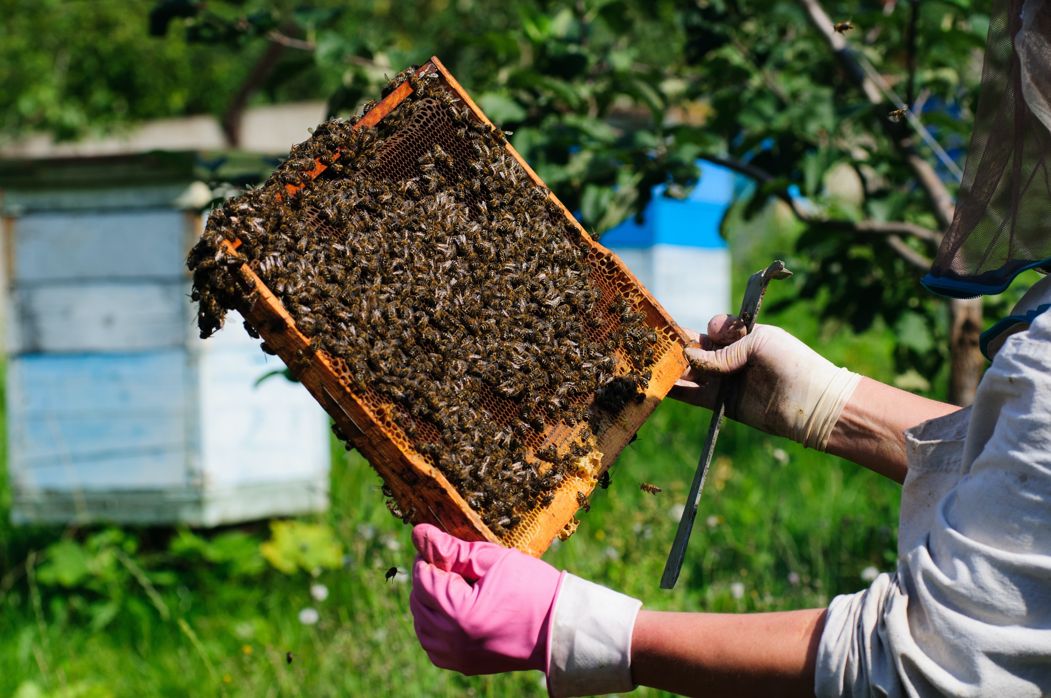 Neonicotinoid ban: how meta-analysis helped show pesticides do harm bees
