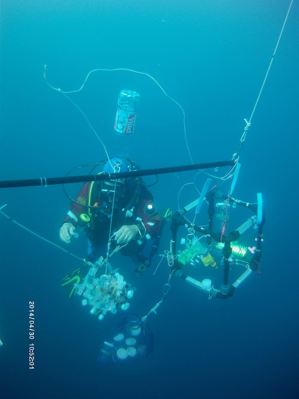 The 'salpatron' allows researchers to conduct feeding studies underwater.  Gitai Yahel/Ayelet Dadon-Pilosof (www.gitaiyahel.com), CC BY-ND