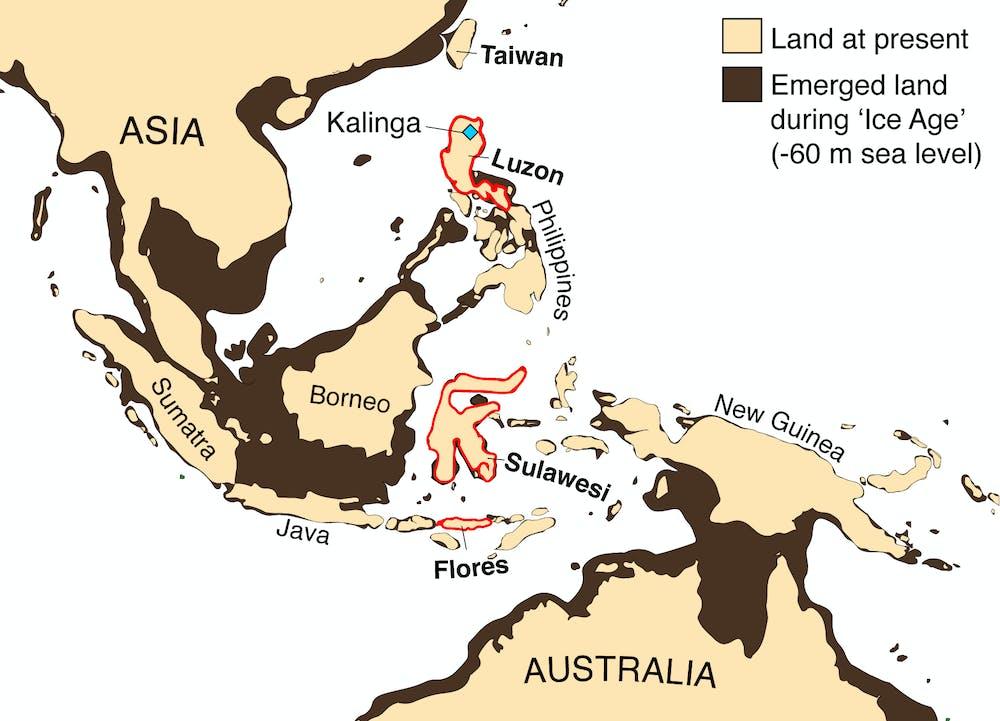 Penemuan Fosil Badak Menulis Ulang Sejarah Manusia Purba Filipina