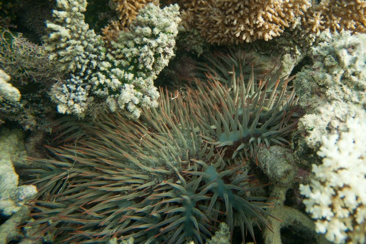 $500 million for the Great Barrier Reef is welcome, but we need a sea change in tactics too
