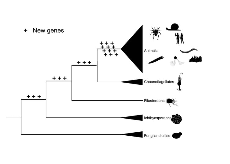 We reconstructed the genome of the 'first animal'