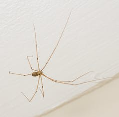 College Media Network Should I Kill Spiders in my Home? An Entomologist Explains why not to