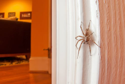 Should I Kill Spiders In My Home An Entomologist Explains Why Not To