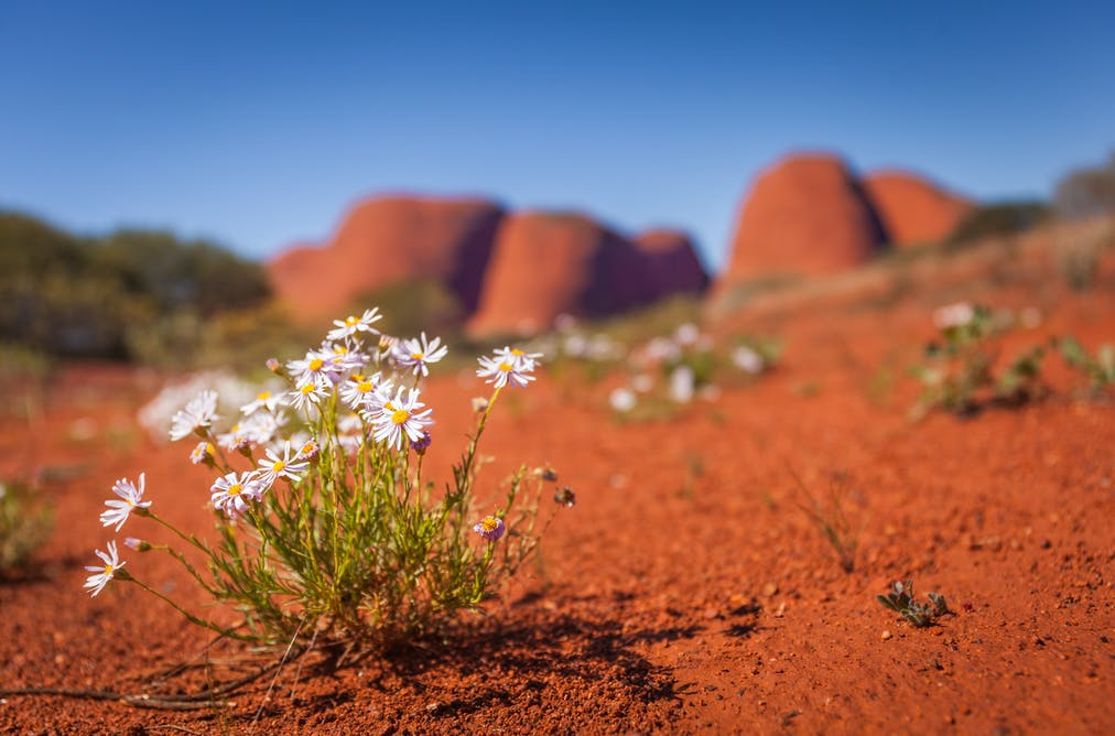 The art of healing: five medicinal plants used by Aboriginal