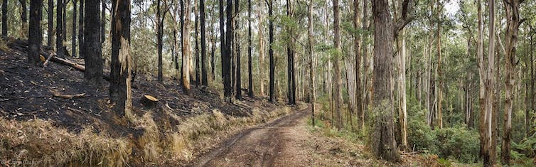 Logging burns conceal industrial pollution in the name of 'community safety'