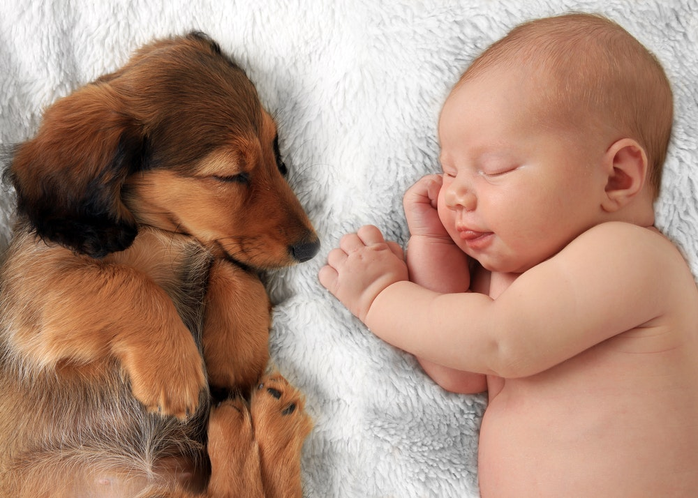 Babies And Pets A Guide For New Parents