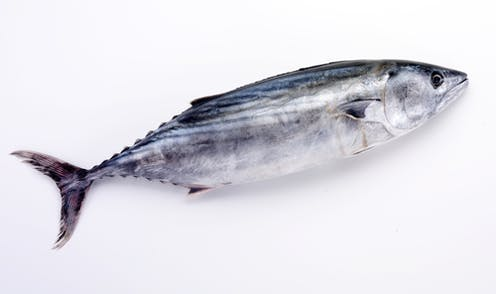 Autism Is Not Linked To Eating Fish In >> Autism Not Linked To Eating Fish During Pregnancy Large New Study