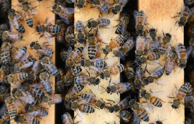 inside the world of renting bees